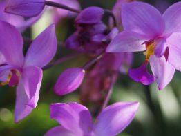 29 jardin botanico DSC08261