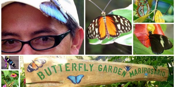 Butterfly Gardens in Costa Rica