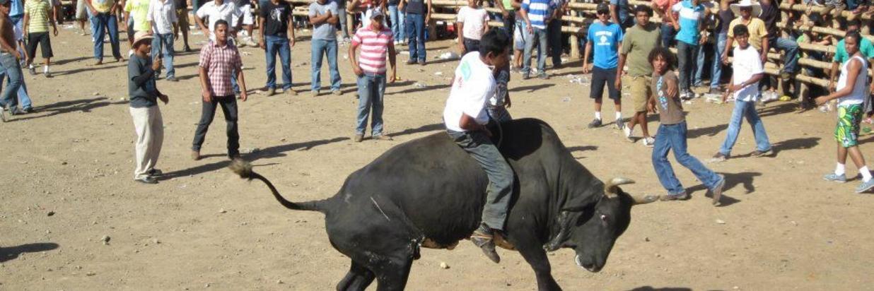 Bull Riding in Guanacaste