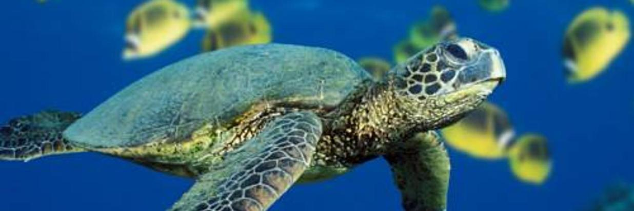 Fun Facts About Sea Turtles: Nesting, Navigation & Structure