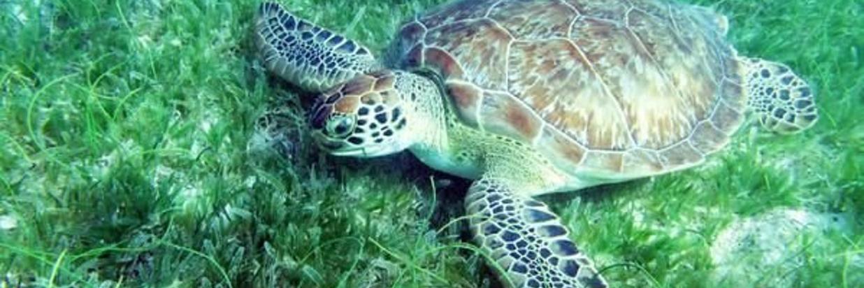 Save Sea Turtles in Costa Rica