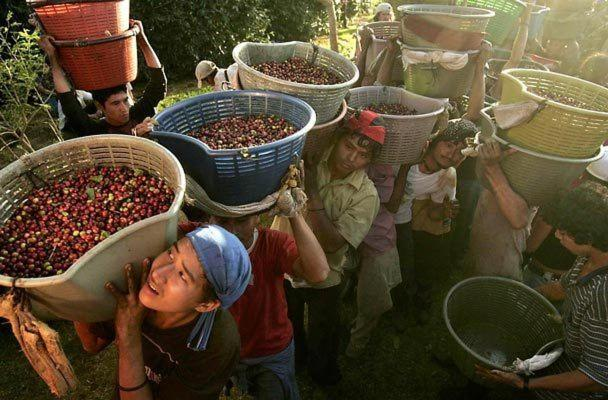 Coffee Landmarks in Costa Rica History