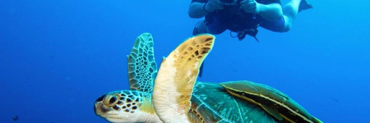How To Get Affordable Diving Equipment in Costa Rica?