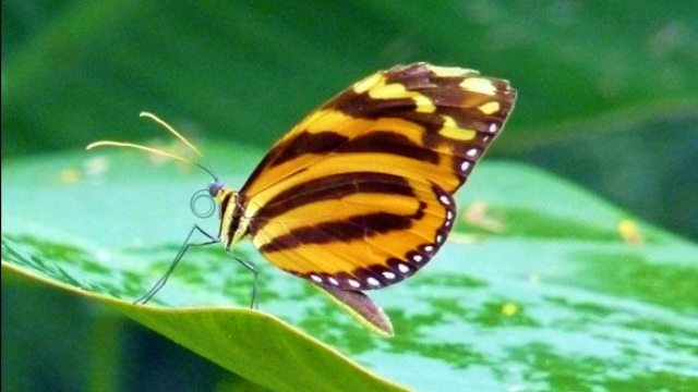 Blue River Butterfly Gardens in Costa Rica Rainforest