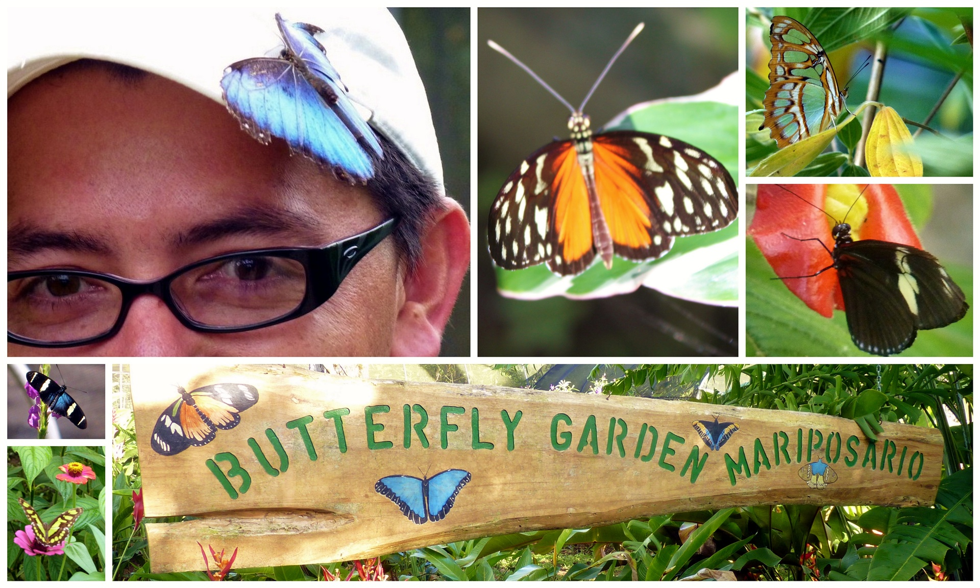 Butterfly Gardens in Costa Rica Rainforest