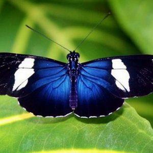 butterfly-costa-rica-3
