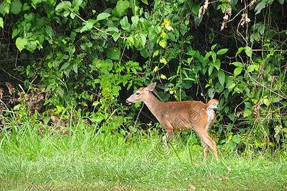 Costa Rica National Symbol of Wildlife