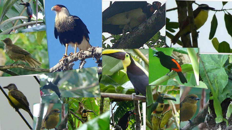 Rincon de la Vieja birds