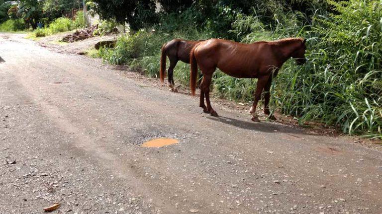 road by Rincon de la Vieja
