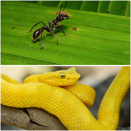 Bugs and Coral Snake, Costa Rica