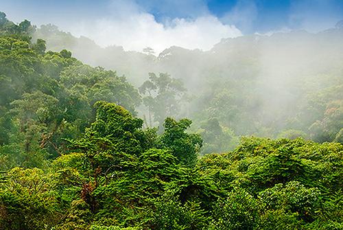 Rincon de la Vieja rain forest