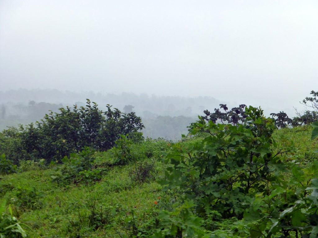 Rain forest Rincon de la Vieja